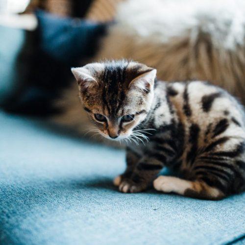 A kitten sat on a blue sofa